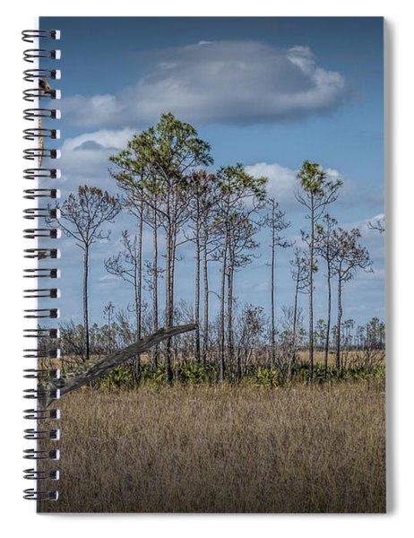 Red Shouldered Hawk In The Florida Everglades Spiral Notebook