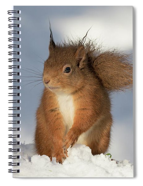 Red Squirrel In The Snow Spiral Notebook