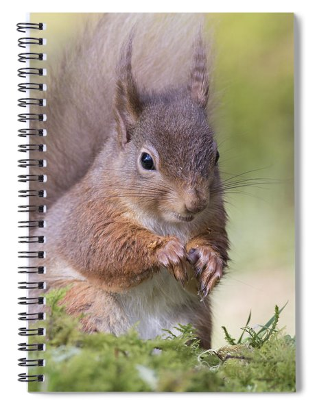 Red Squirrel - Scottish Highlands #1 Spiral Notebook