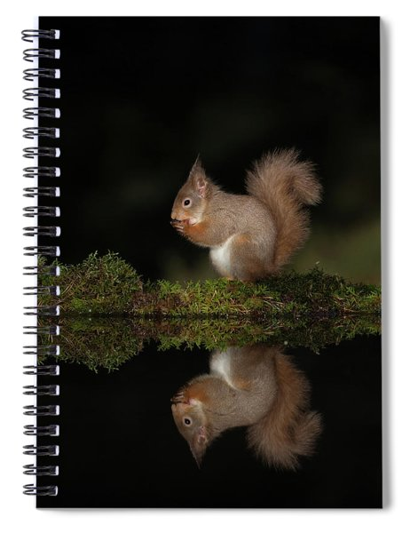 Red Squirrel Reflects Spiral Notebook