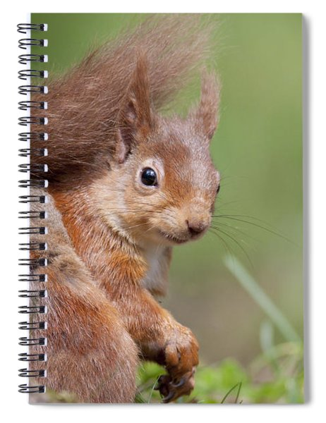 Red Squirrel - Scottish Highlands  #17 Spiral Notebook