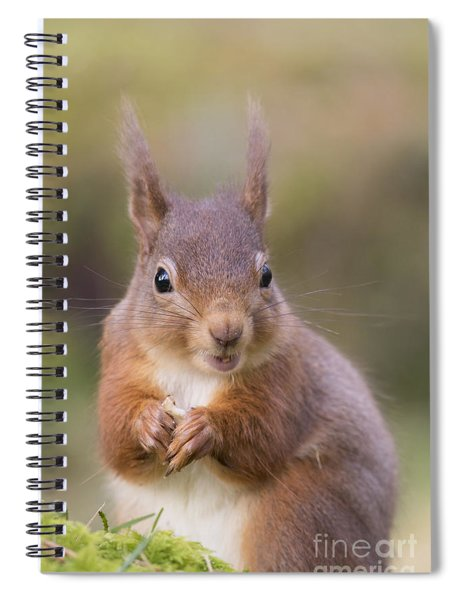 Red Squirrel - Scottish Highlands #18 Spiral Notebook