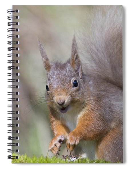 Red Squirrel - Scottish Highlands #26 Spiral Notebook