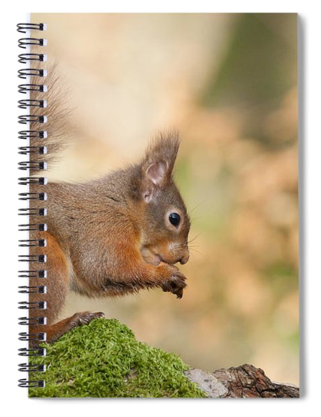 A Moment Of Meditation - Red Squirrel #27 Spiral Notebook