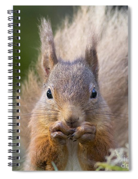 Red Squirrel - Scottish Highlands #28 Spiral Notebook