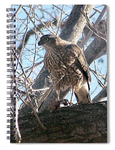 Red Tail Hawk Spiral Notebook