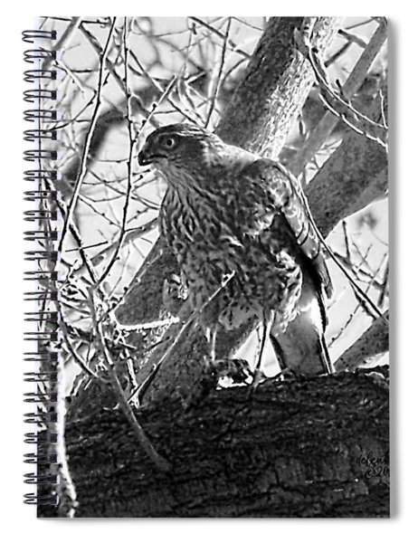 Red Tail Hawk In Black And White Spiral Notebook
