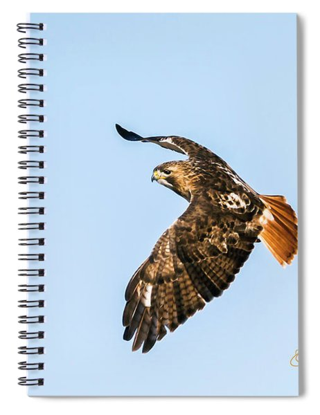 Spiral Notebook featuring the photograph Red-tail Hawk In Flight by Edward Peterson
