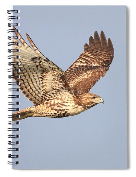 Red Tailed Hawk 20100101-1 Spiral Notebook