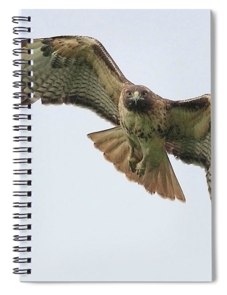 Red Tailed Hawk Finds Its Prey Spiral Notebook