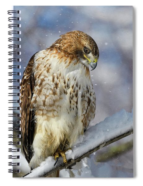 Red Tailed Hawk, Glamour Pose Spiral Notebook