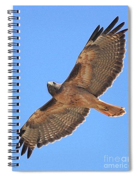 Red Tailed Hawk In Flight Spiral Notebook