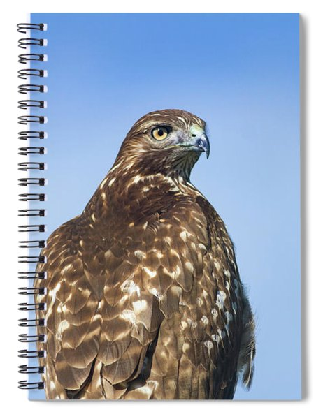 Red-tailed Hawk Perched Looking Back Over Shoulder Spiral Notebook