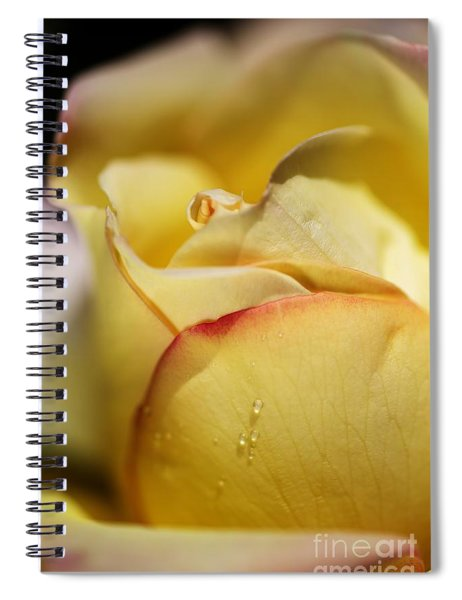 Red Tipped Yellow Rose Spiral Notebook