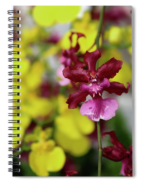 Maroon And Yellow Orchid Spiral Notebook