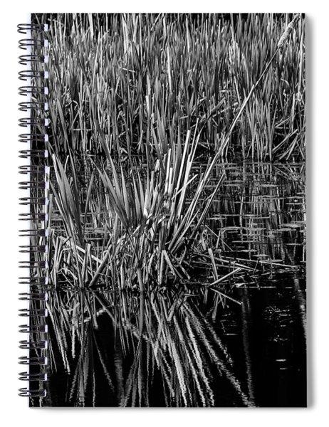 Reeds Reflection  Spiral Notebook