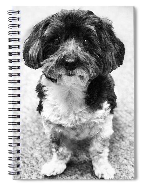 Reggie Spiral Notebook