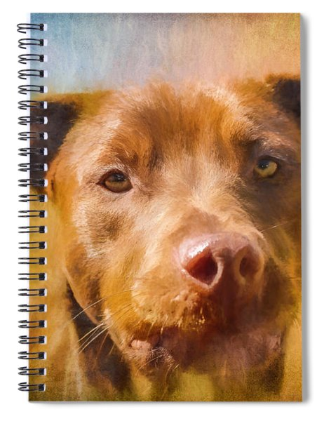 Rescued Chocolate Lab Portrait Spiral Notebook