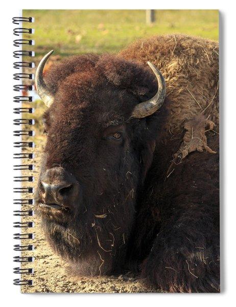 Resting Buffalo Spiral Notebook