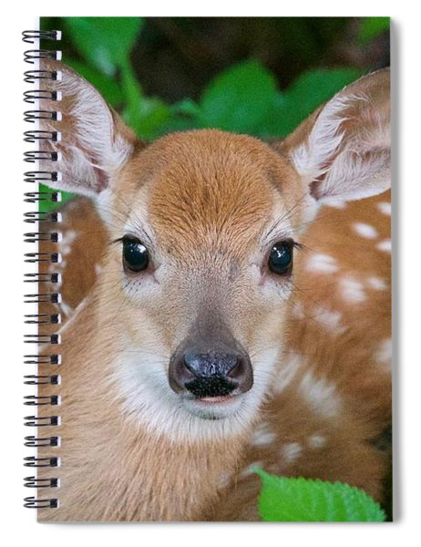 Resting Fawn Spiral Notebook