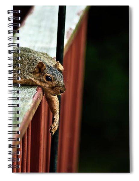 Resting Squirrel Spiral Notebook
