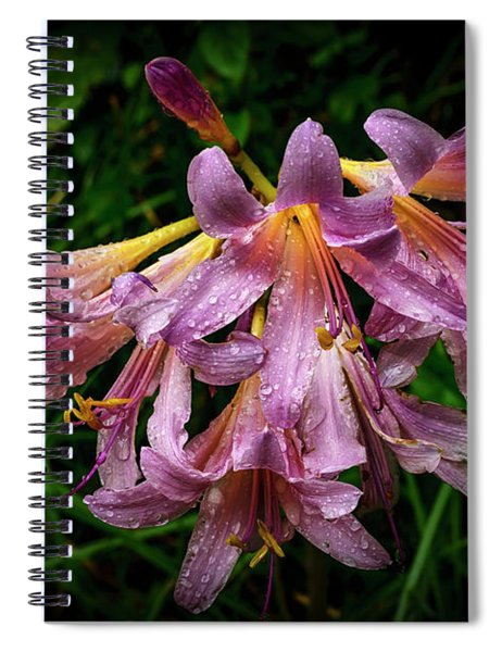 Resurrection Lily In The Rain Spiral Notebook