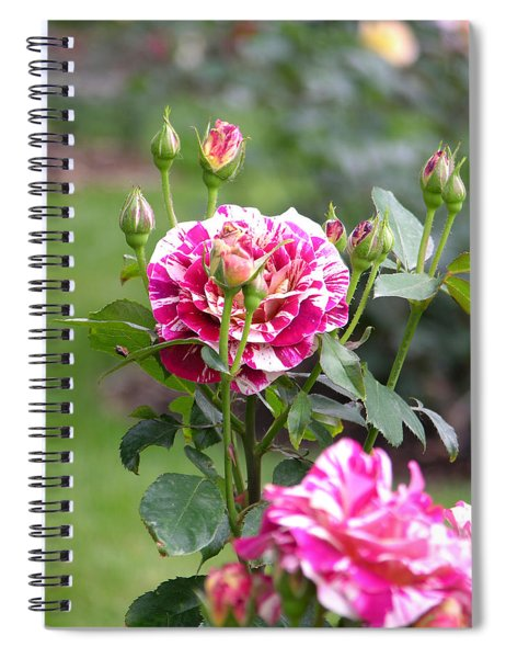 Spiral Notebook featuring the photograph r.'George Burns' 6412 by Brian Gryphon