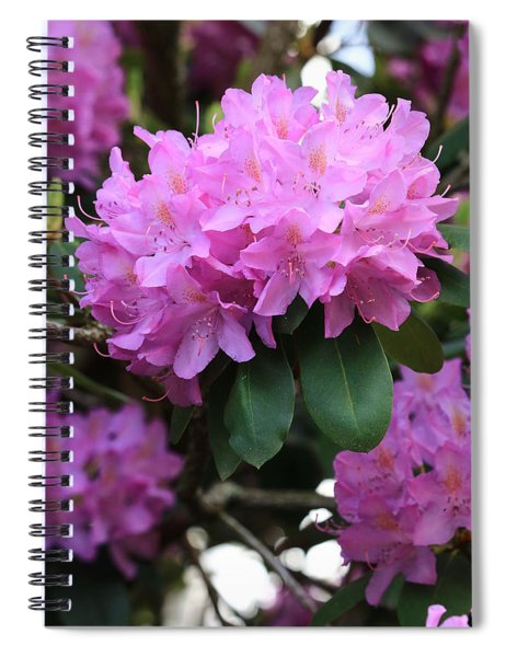 Rhododendron Beauty Spiral Notebook