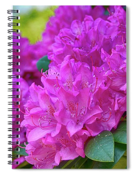 Rhododendron In Pink Spiral Notebook