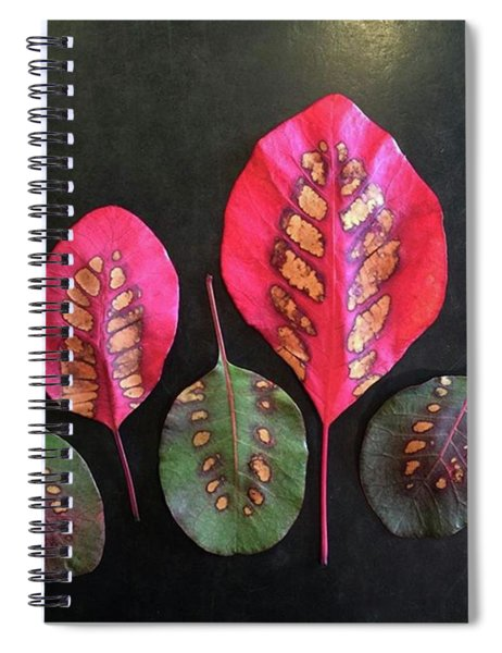 Ridiculously Madly In Love With These Spiral Notebook