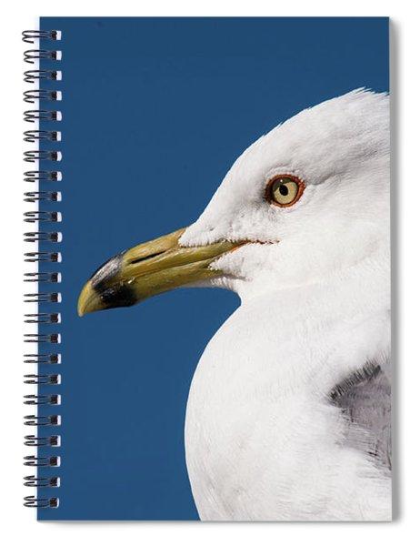 Ring-billed Gull Portrait Spiral Notebook