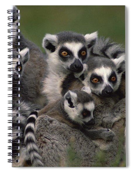 Ring-tailed Lemur Lemur Catta Group Spiral Notebook