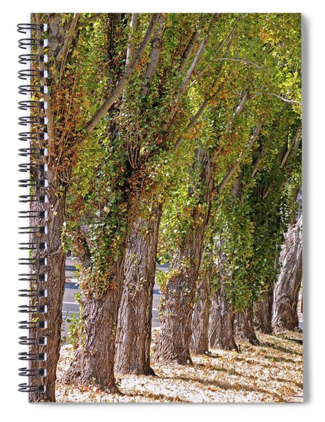 Rise Of Trees Spiral Notebook
