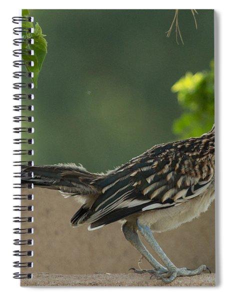 Roadrunner Closeup Spiral Notebook