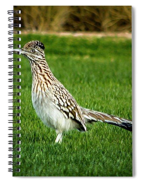 Roadrunner In The Grass Spiral Notebook