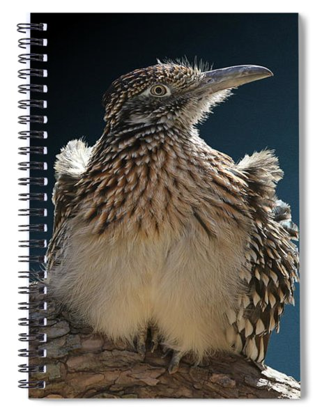 Roadrunner On A Log Spiral Notebook