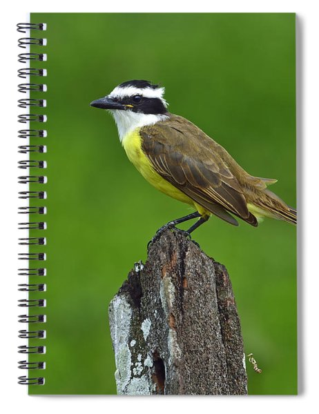 Roadside Kiskadee Spiral Notebook