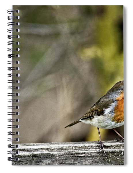 Robin On Fence Spiral Notebook
