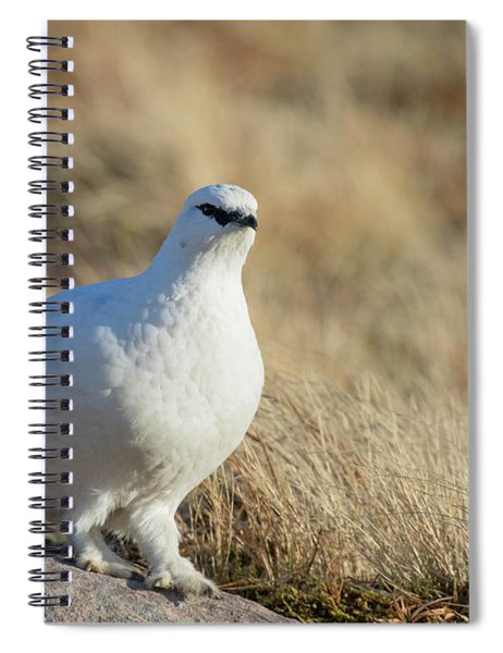 Rock Ptarmigan Spiral Notebook