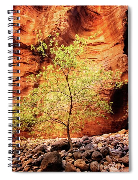 Rock Tree Spiral Notebook
