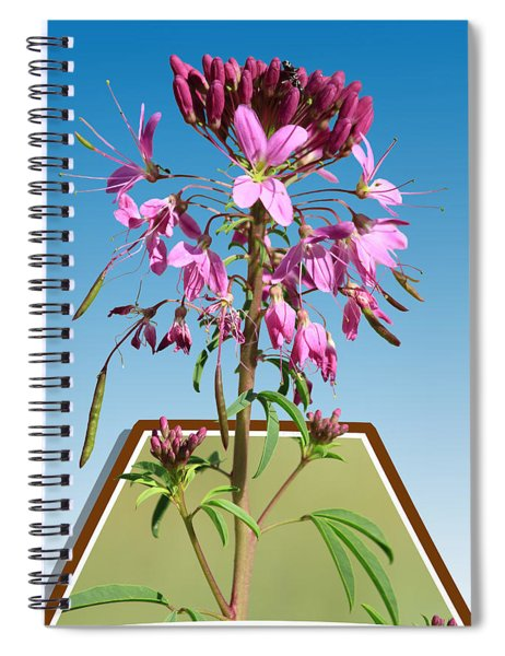 Rocky Mountain Bee Plant Spiral Notebook