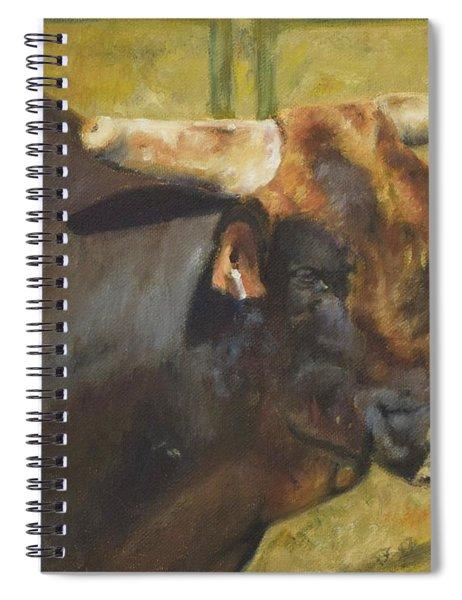 Rodeo Bull 1 Spiral Notebook