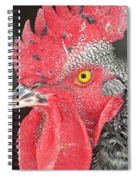 Rooster Named Brute Spiral Notebook