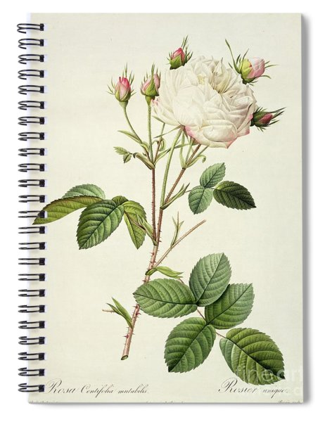 Rosa Centifolia Mutabilis Spiral Notebook