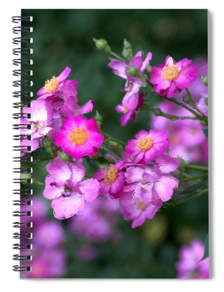 Spiral Notebook featuring the photograph rosa 'Daydream' 1762 by Brian Gryphon