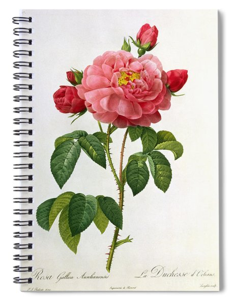 Rosa Gallica Aurelianensis Spiral Notebook