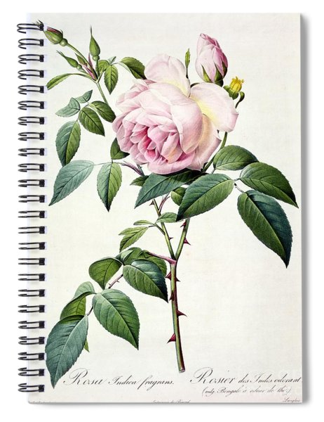 Rosa Indica Fragrans Spiral Notebook