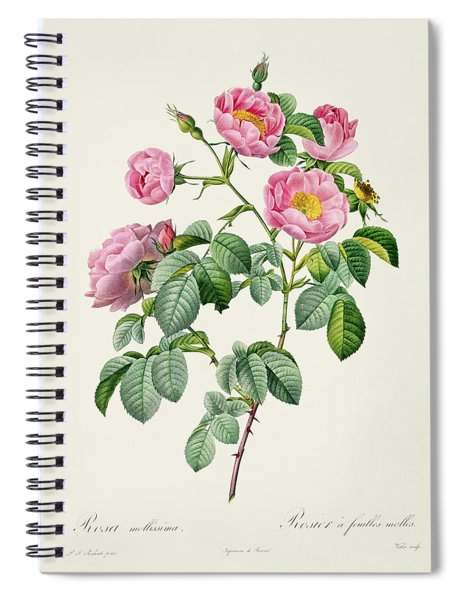 Rosa Mollissima Spiral Notebook