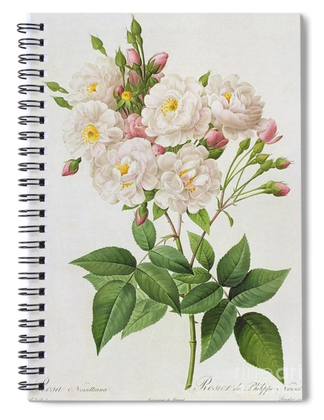 Rosa Noisettiana Spiral Notebook