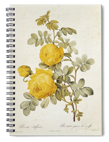 Rosa Sulfurea Spiral Notebook